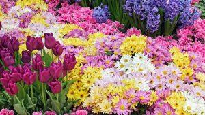 RI Spring Festival