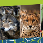 Endangered Species Day: Art and Animals