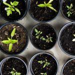 Spring Plant Swap