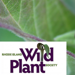 Eco-system Gardening with RI Native Plants