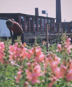 What Cheer Flower Farm