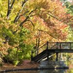 Fall Foliage Photography Workshop