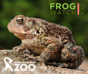 Be a FrogWatcher! FrogWatch USA Training