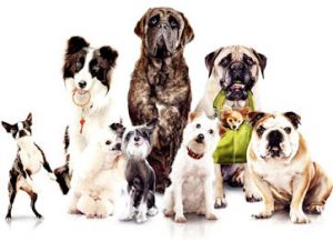 East Greenwich Animal Protection League