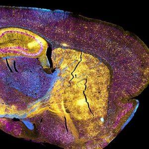 University of Rhode Island: George & Anne Ryan Institute for Neuroscience