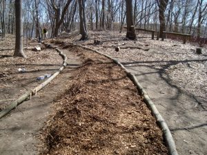 Blackstone Parks Conservancy: Field