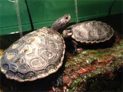 Save The Bay Exploration Center and Aquarium